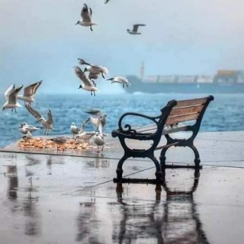 صورة Ahmed morning, رجل